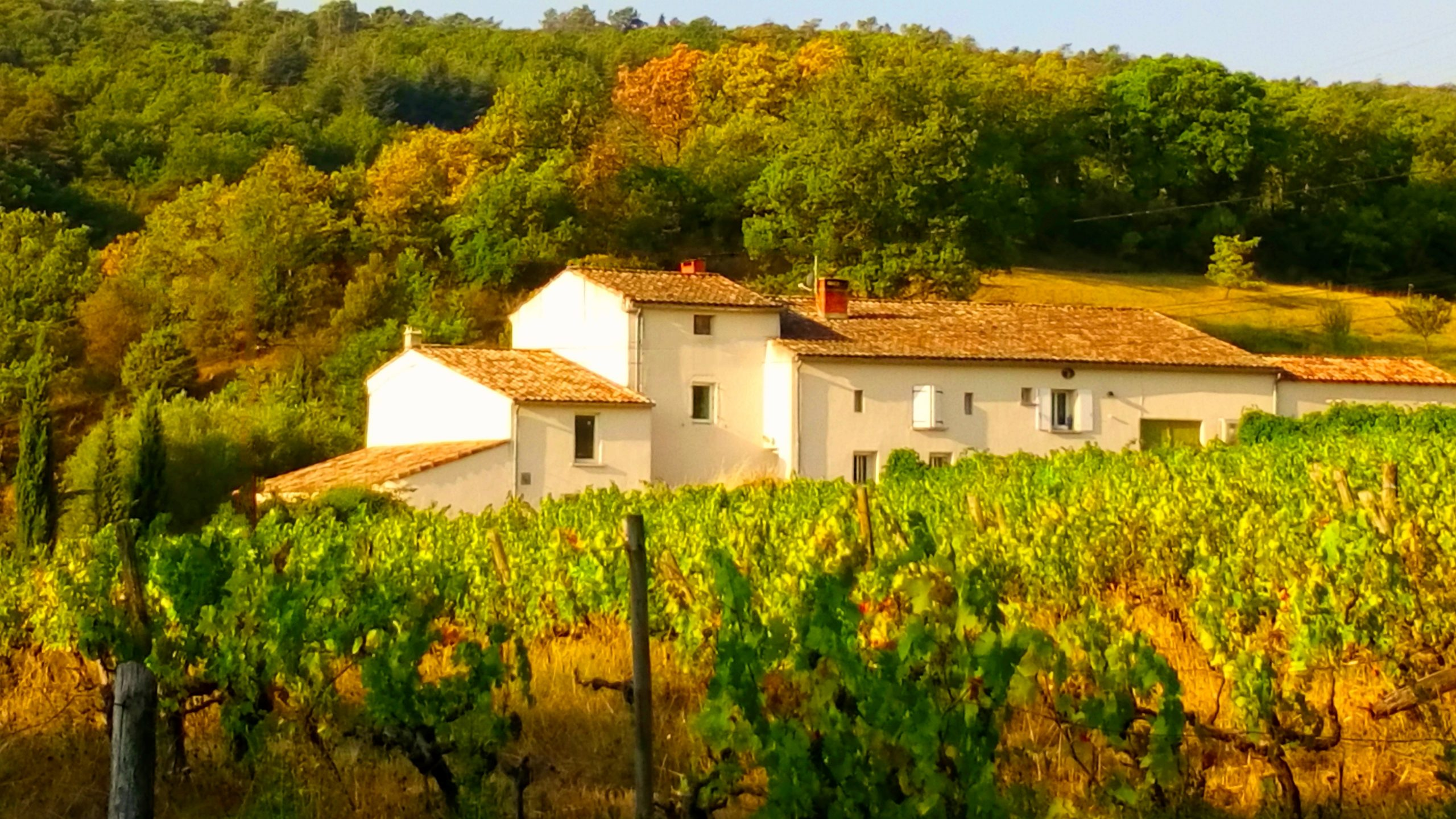 Une vue de La Source Ardèche au milieu des vignes et des bois