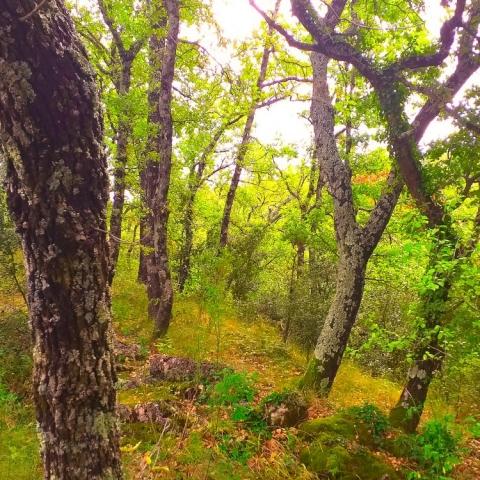La Source Ardèche - Forêt sauvage